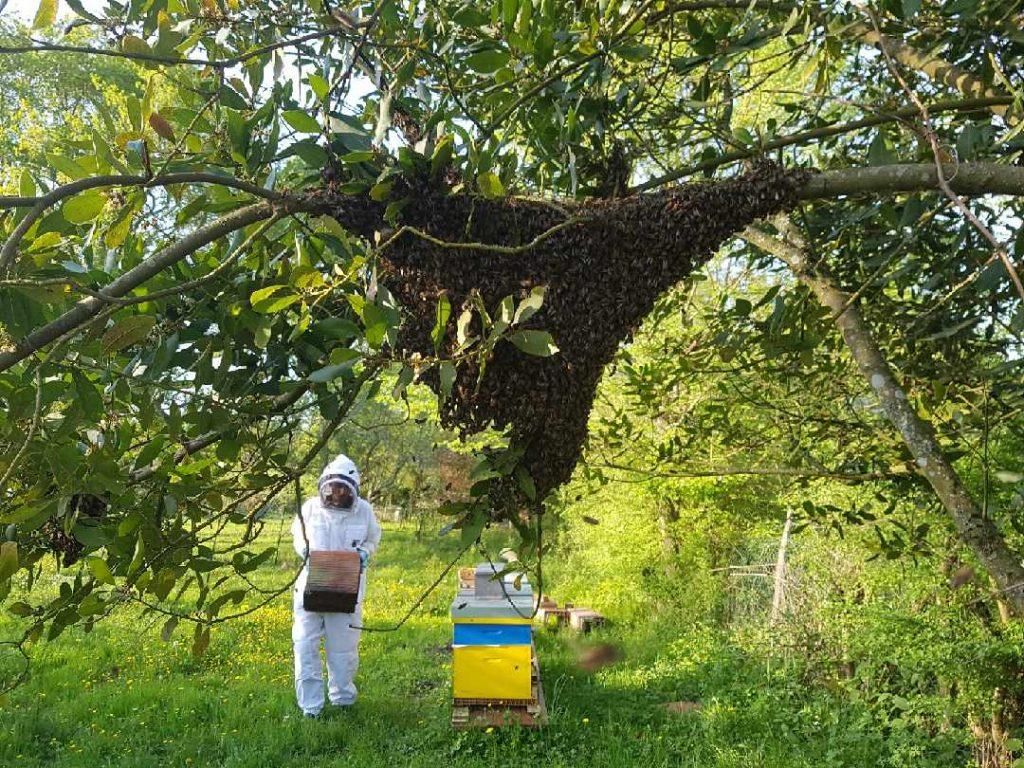 Expert-frelon apiculteurs frelon, frelons asiatiques et guêpes